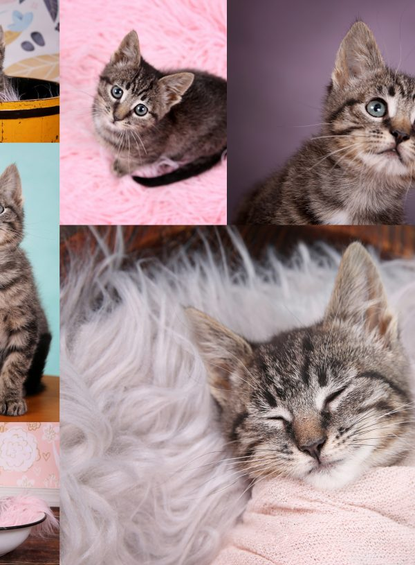 Monica's Kitten Session